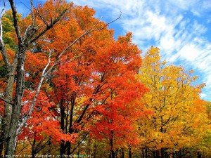 картинка осень